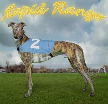 English Greyhound Derby