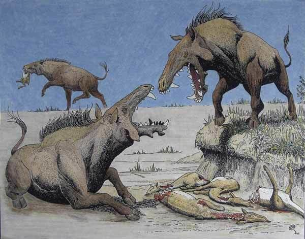 Entelodont Those giant killer pigs from hell aren39t pigs Scientific American