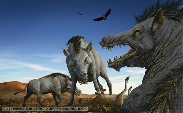 Entelodont BBC Nature Entelodonts videos news and facts