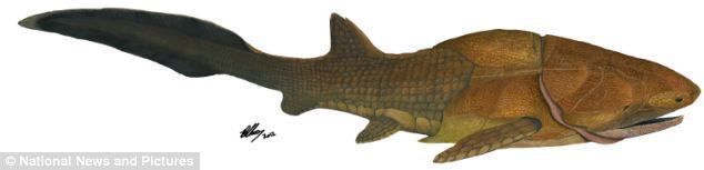 Entelognathus Entelognathus The world39s first FACE The fossil of fish that re