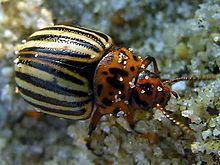Entomological warfare httpsuploadwikimediaorgwikipediacommonsthu