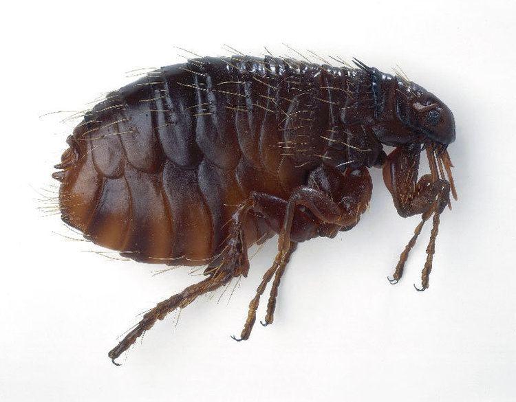 Entomological warfare Animal and Entomological Warfare