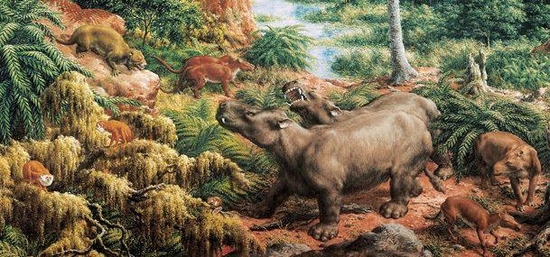 Eocene httpsresearchamnhorgpaleontologyperissodact