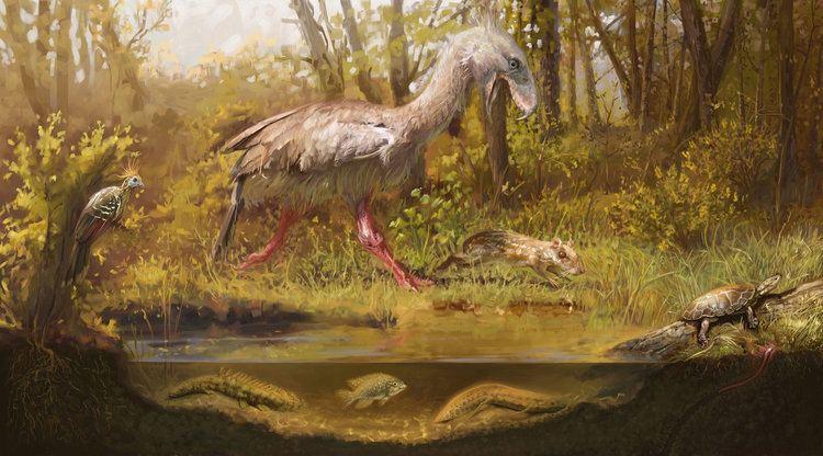 Eocene eocene DeviantArt