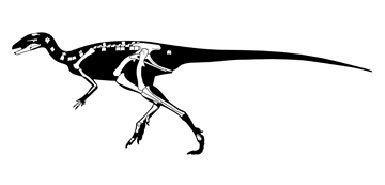 Eocursor PALAEOBLOG Eocursor parvus from South Africa