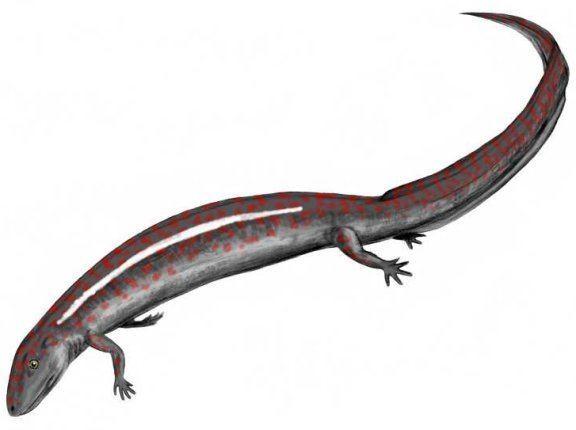 Eogyrinus Eogyrinus Prehistoric Animals