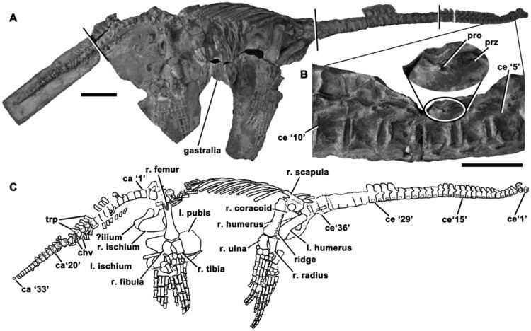 Eoplesiosaurus