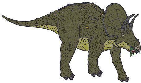 Eotriceratops Eotriceratops Dinosaur Facts information about the dinosaur
