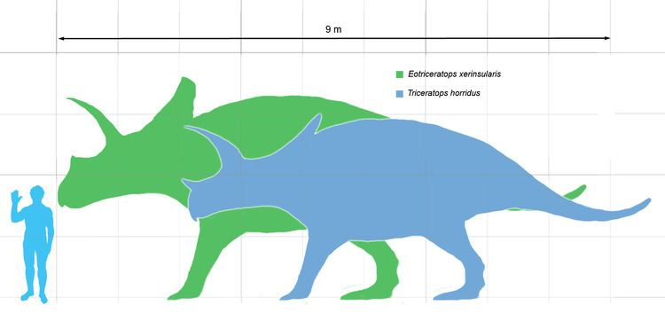 Eotriceratops FileEotriceratops scalepng Wikimedia Commons