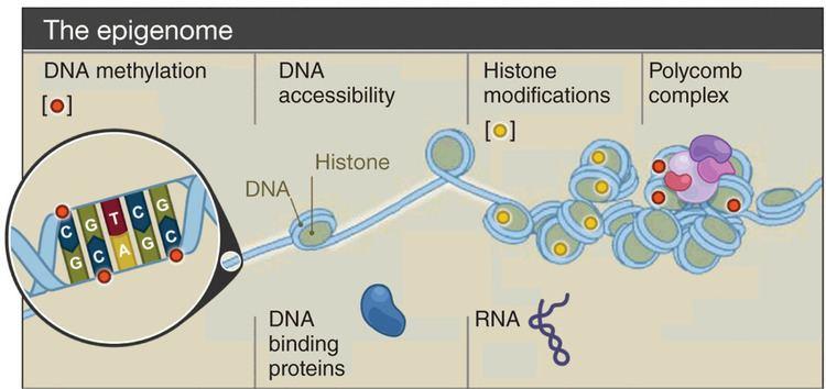 Epigenomics wwwnaturecomnbtjournalv28n10imagesnbt1010