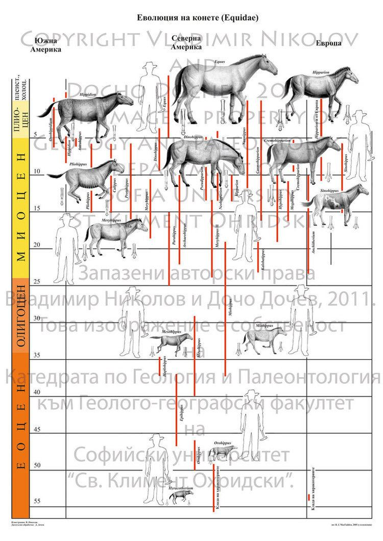 Equidae Evolution of Equidae by TPEKC on DeviantArt