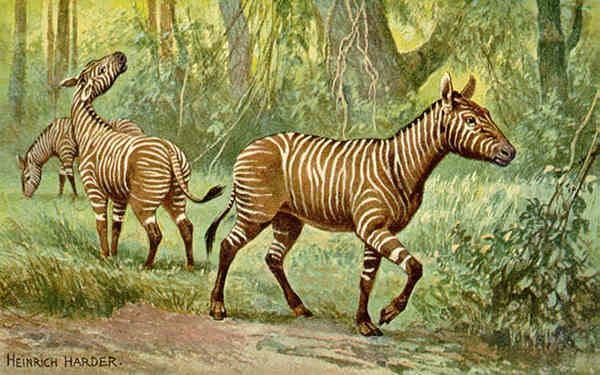 Equidae Hypohippus Extinct Equidae The Equinest