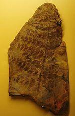 Equisetales httpsuploadwikimediaorgwikipediacommonsthu