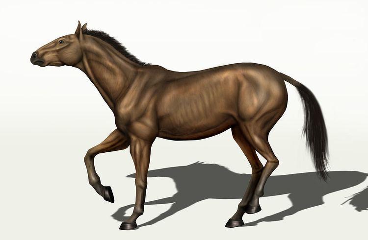 Equus conversidens httpsuploadwikimediaorgwikipediacommonsthu