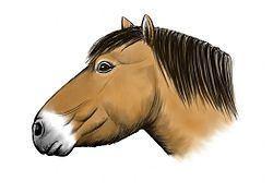 Equus lambei httpsuploadwikimediaorgwikipediacommonsthu