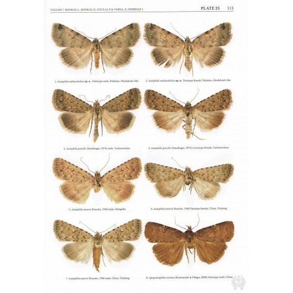 Erebidae Ronkay L Ronkay G Gyulai P Varga Z 2014 Erebidae 1 A