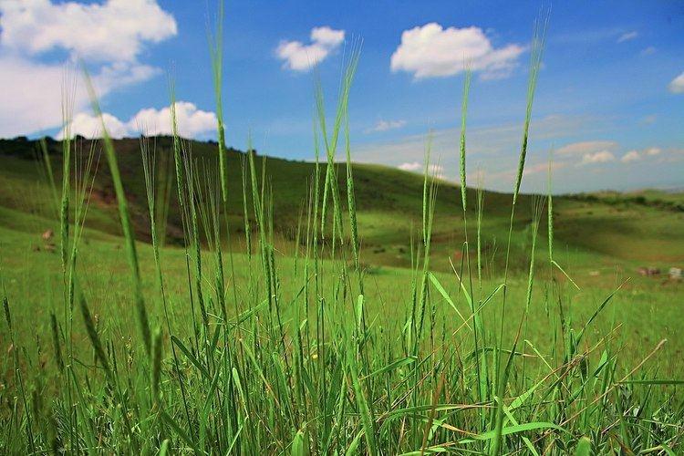 Erebuni State Reserve