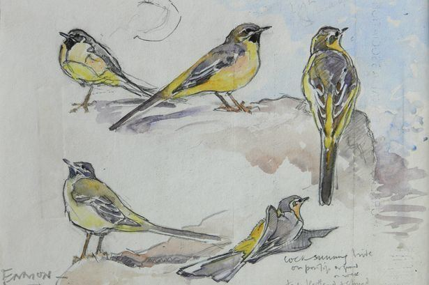 Eric Ennion Decade of pioneering Seahouses bird artist Eric Ennion is