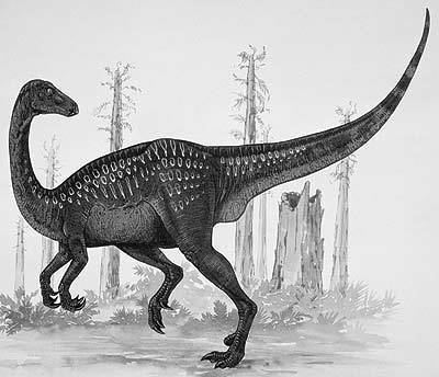 Erlikosaurus The Dino Directory Erlikosaurus Natural History Museum