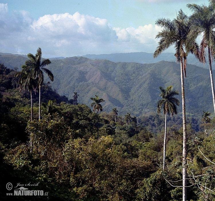 Escambray Mountains Escambray mountains Pictures Escambray mountains Images NaturePhoto