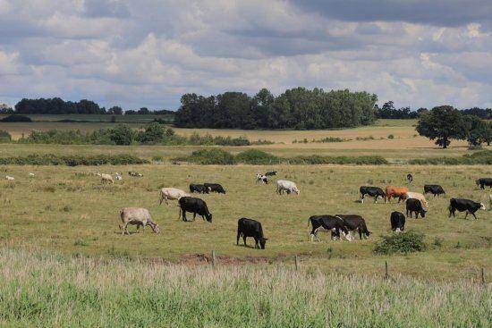 Essex Beautiful Landscapes of Essex