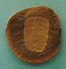 Essexella httpsuploadwikimediaorgwikipediacommonsthu