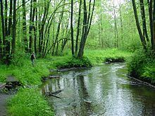 Este (river) httpsuploadwikimediaorgwikipediacommonsthu