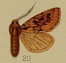 Estimata httpsuploadwikimediaorgwikipediacommonsthu