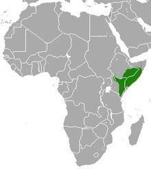 Ethiopian dwarf mongoose httpsuploadwikimediaorgwikipediacommonsthu
