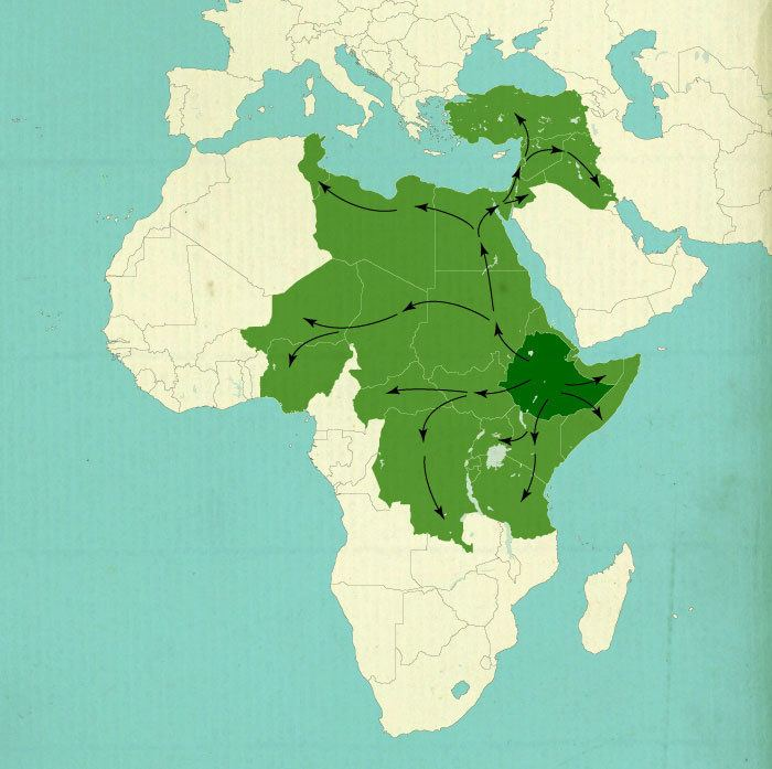 Ethiopian Empire Typoccupation Hebrew under the occupation of Ethiopia Bentzi Binder