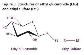Ethyl glucuronide wwwwardelabcomimgreports193figure3jpg