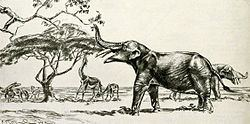 Eubelodon valentintblogbgphotos178454originalEubelodonjpg