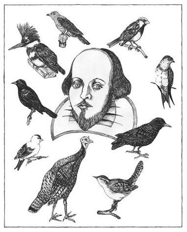 Eugene Schieffelin Eugene Schieffelin William Shakespeare and Starlings in the USA