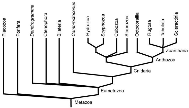 Eumetazoa GEOL 331 Principles of Paleontology