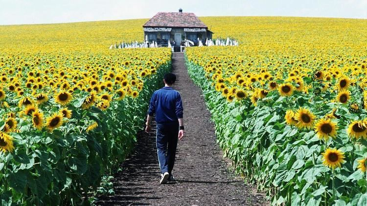 Everything Is Illuminated (film) Everything Is Illuminated 2005 MUBI