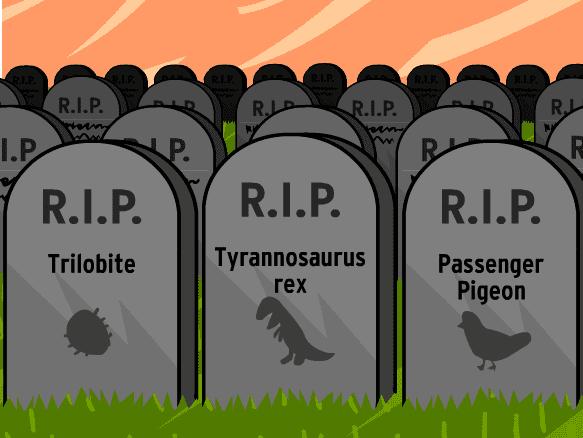 Extinction httpscdnbrainpopcomscienceourfragileenviron