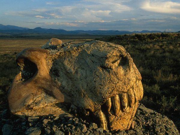 Extinction Permian Extinction Article Mass Extinction Information Park