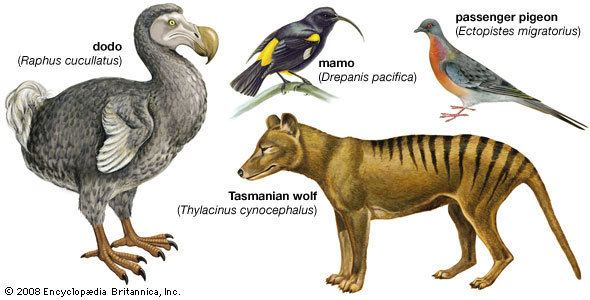Extinction extinction Occurrences amp Facts Britannicacom