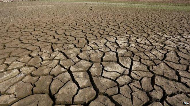 Extinction Earth 39entering new extinction phase39 US study BBC News