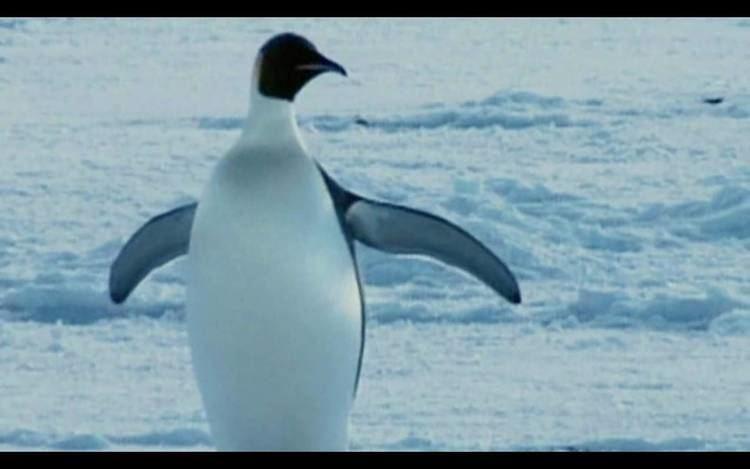 Farce of the Penguins Samuel Jackson vs A Nutless Penguin YouTube
