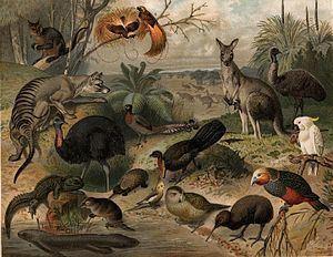 Fauna httpsuploadwikimediaorgwikipediacommonsthu