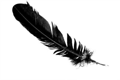 Feather The meaning and symbolism of the word Feather
