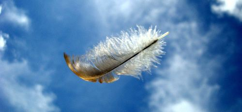 Feathers in the Wind Feathers In The Wind Laughs Love