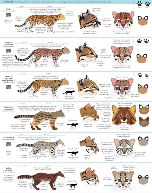 Felinae Phill39s place for absolute CRAP anatoref Guide to Felinae