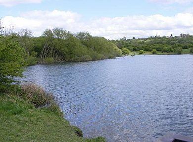 Fens Pools Fens Pool Brierley Hill United Kingdom Fish Around