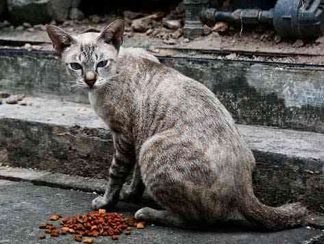 Feral cat What is a Feral Cat Understanding Street Cats petMD