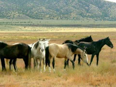 Feral horse Mountain Prairie Feral Horses