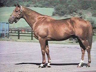 Ferdinand (horse) Ferdinand39s Legacy Saves the Lives of ExRacehorses ilovehorsesnet