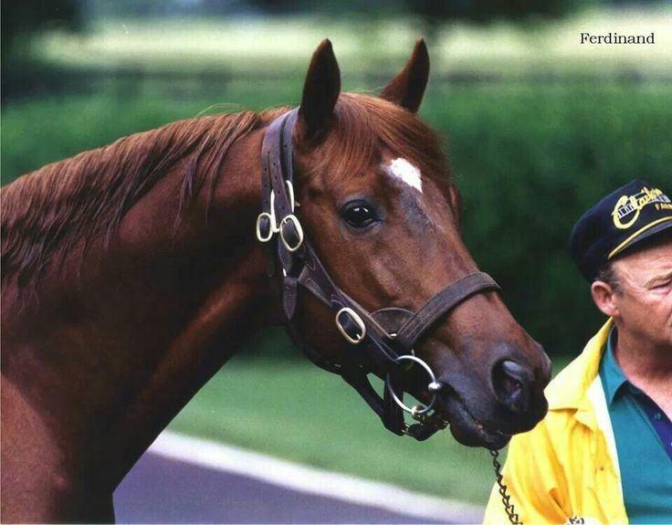 Ferdinand (horse) 1000 images about Ferdinand on Pinterest Banja luka Retirement