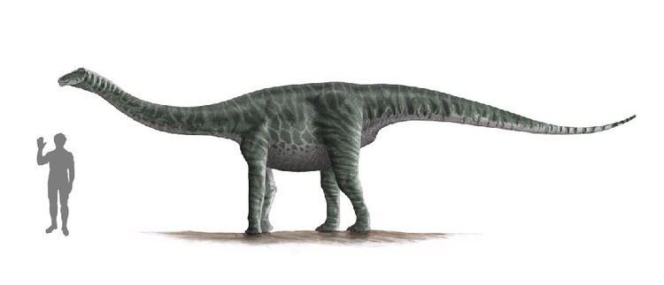 Ferganasaurus imagesdinosaurpicturesorgFerganasaurus7688jpg